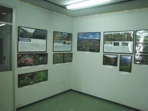 阿蘇展示室植物