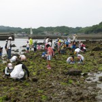 海辺の生き物観察会1