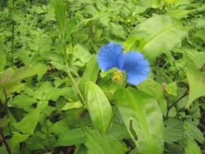 植物観察2