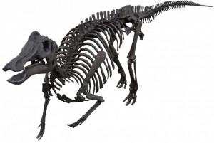 ニッポノサウルス