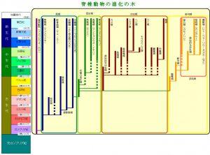 脊椎動物の進化の木の図
