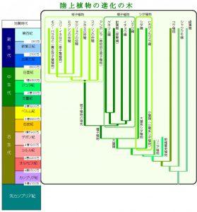 陸上植物の進化の木の図